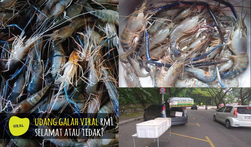 Benarkah Udang Galah Viral Rm1 Dari Thailand Merbahaya Dan Tidak Sihat Rileklah Com
