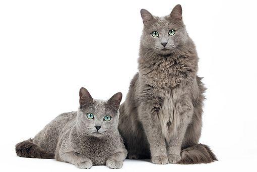 Unduh 93+  Gambar Kucing Berwarna Paling Bagus Gratis