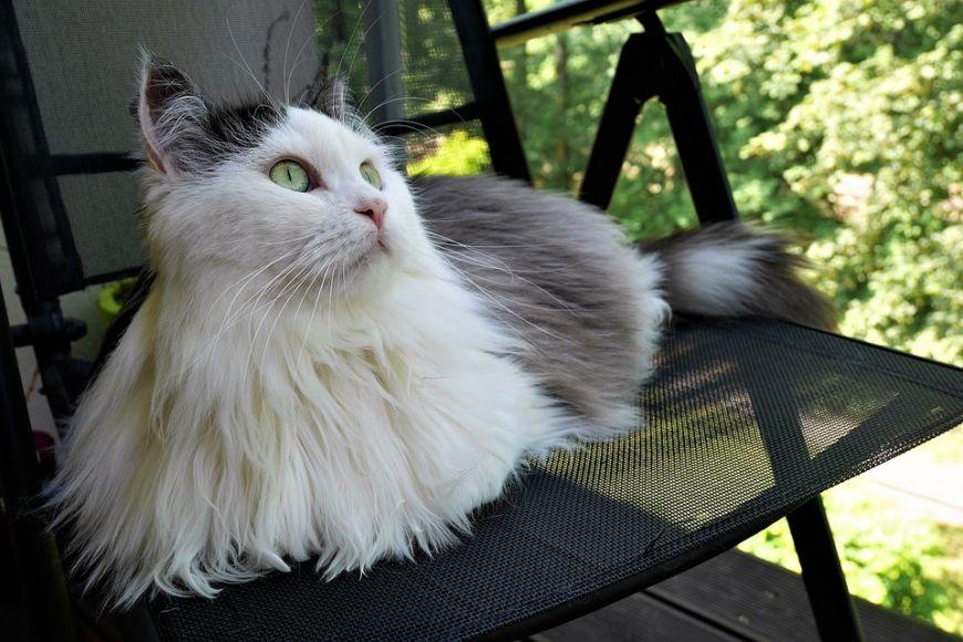 Baka Kucing Paling Cantik Dan Comel Dalam Dunia Ada 12 Kesemuanya Rileklah Com
