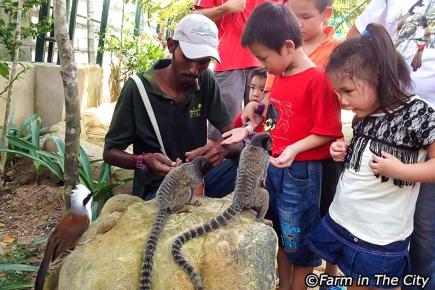 Lumpur di kuala taman haiwan 100 Tempat